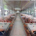 Dự án Trang trại chăn nuôi lợn công nghiệp tại xã Phú Sơn, thị xã Hương Thủy